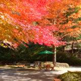 2021年11月7日コスカレードin広島市森林公園9(広島市)