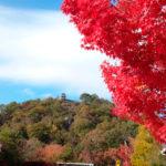 広島市森林公園(秋)